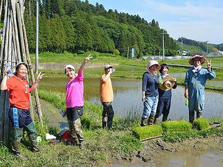 南三陸の休耕田で「稲刈り収穫祭」開催へ 「食べる米は自分たちで作ってみよう」