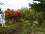 岩手県の三陸最高峰・五葉山でツツジ鑑賞登山 頂上では神事も