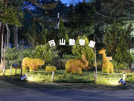 夜行性動物の行動を観察できる人気の「夜の動物園」