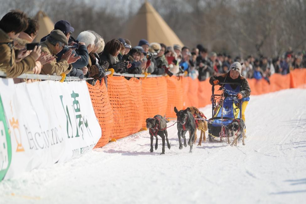 迫力ある犬ぞりレース