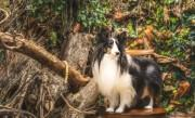 札幌山鼻エリアに愛犬専用写真館 愛らしい表情や飼い主と一緒の写真撮影も