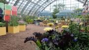 札幌百合が原公園で「キッチンガーデン展」 野菜やハーブの苗販売も
