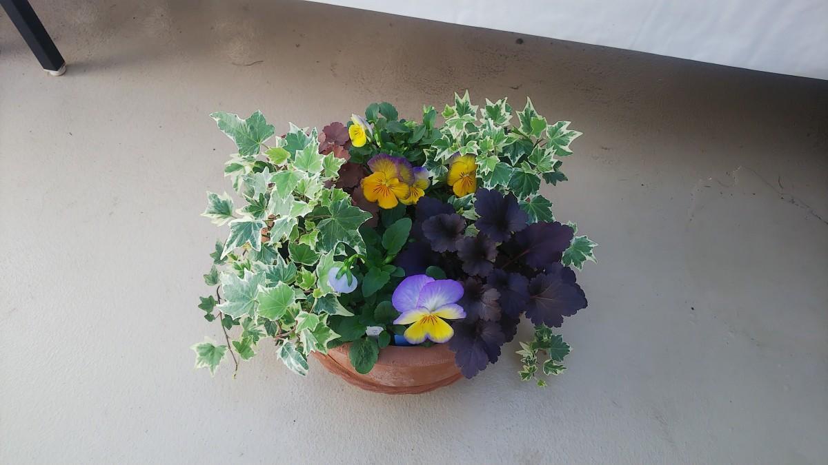 ペレニアルカラーリーフを使った寄せ植えの例