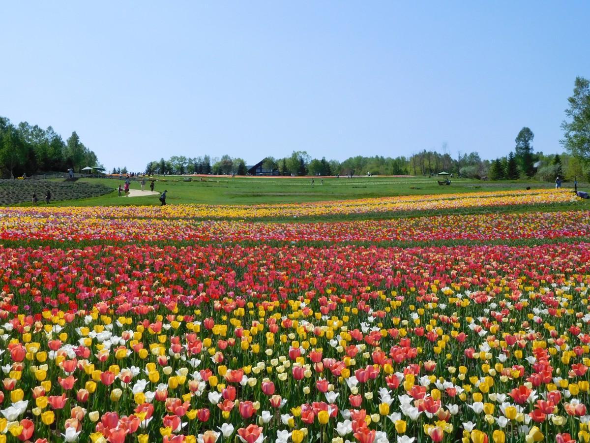 「彩の丘」のイメージ