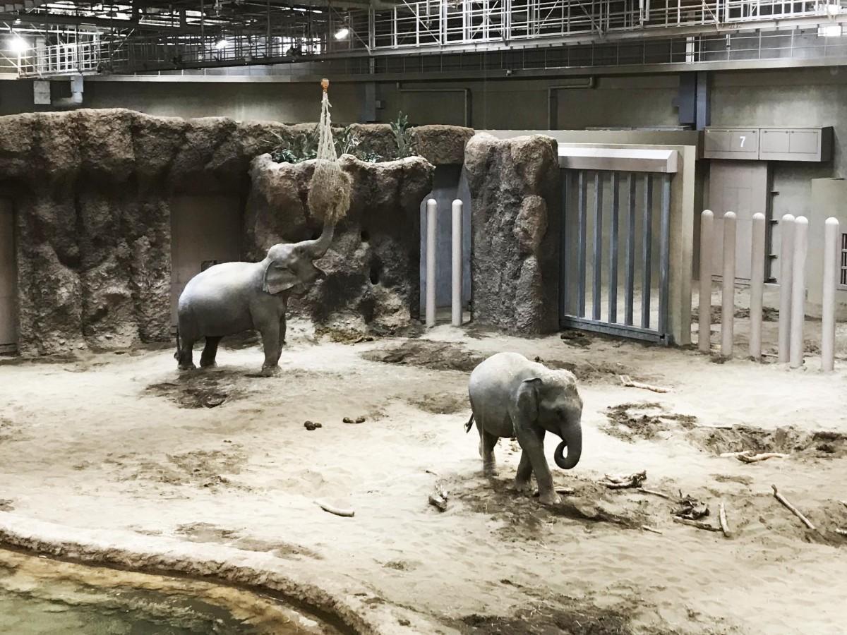 象舎のイメージ