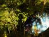 札幌で「定山渓ネイチャールミナリエ」 「星降る夜の森」テーマに