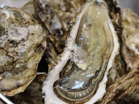 岩手直送の牡蠣