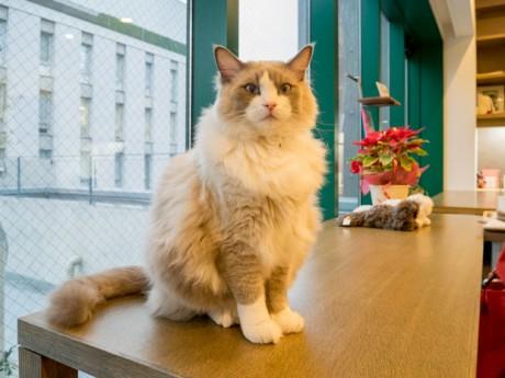 「小さなお庭と猫の図書館」の司書猫シュレ