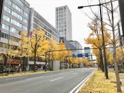 大阪・御堂筋でイチョウ並木が紅葉 落ち葉で歩道も黄色に