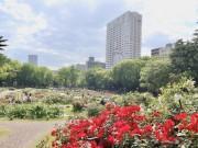 大阪・靱公園のバラが見頃 園内でコンサートや解説ツアーも