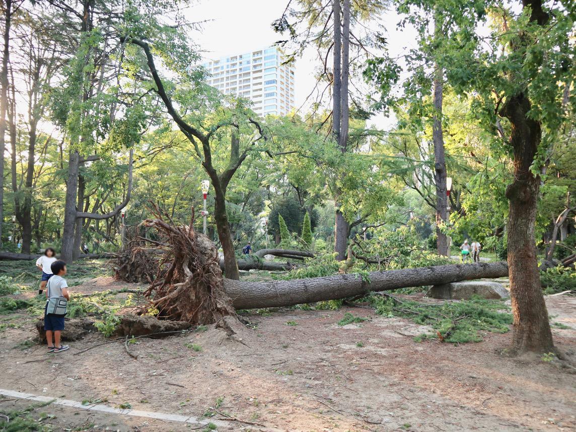 靱公園の倒木