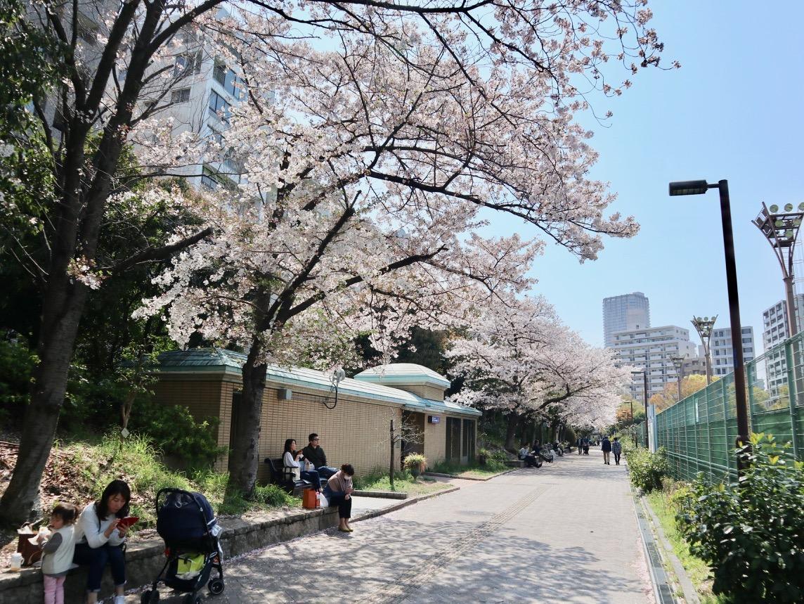 靭公園西園テニスコート横の桜並木