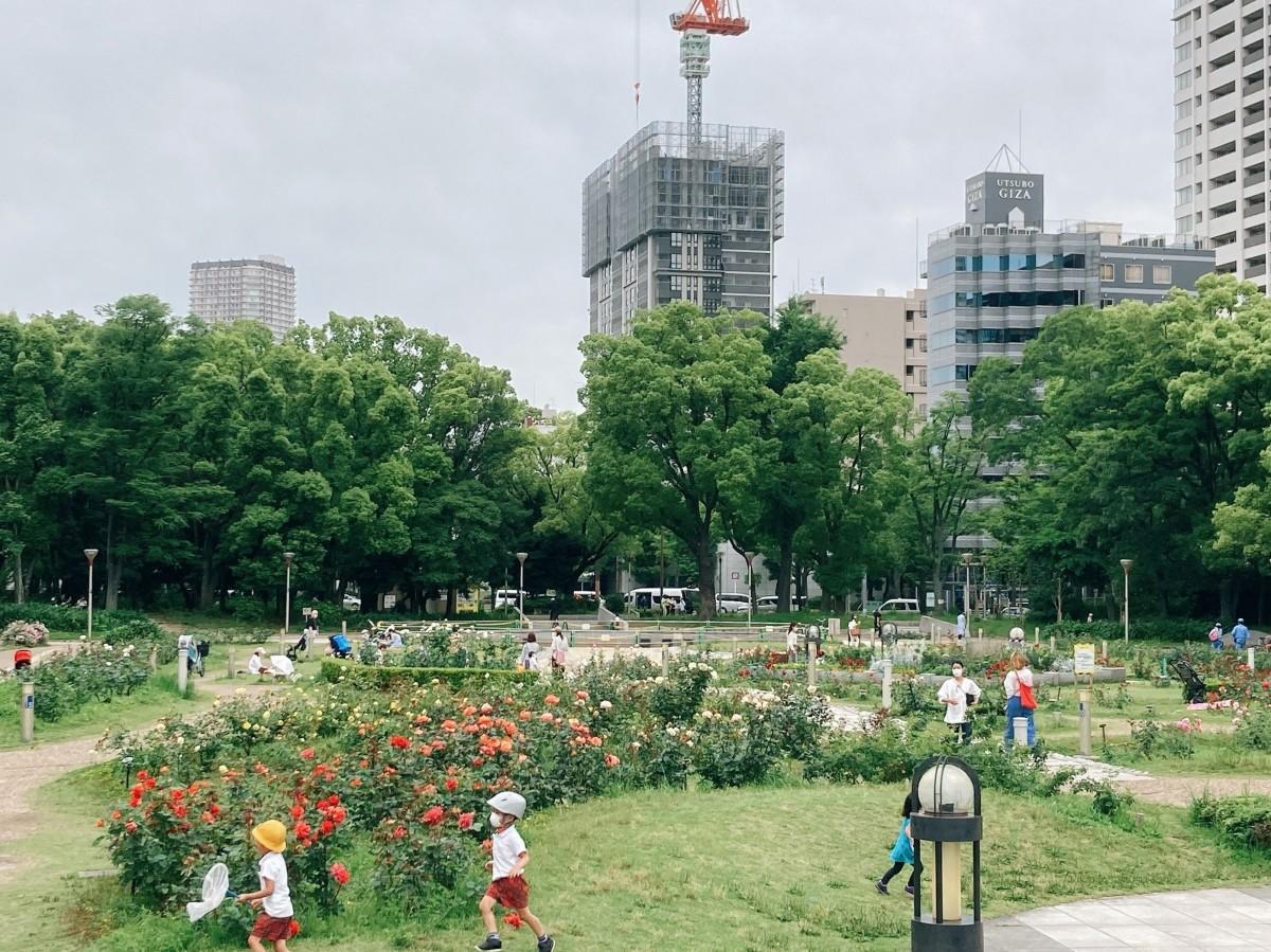 バラの見頃を迎えた靱公園の東園