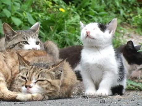 DVD「ねこぱらだいす」収録映像の1カット。「猫の島」でのんびりたくましく生きる猫の様子が映し出される