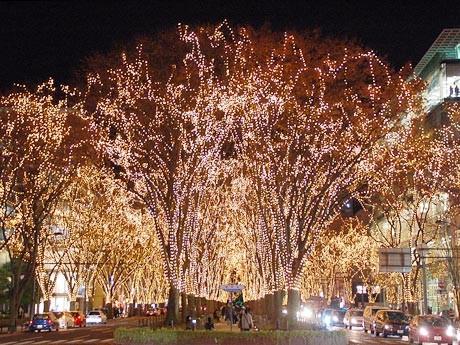 3日に開幕した「SENDAI光のページェント」。定禅寺通のケヤキ並木が55万個の電球で彩られた