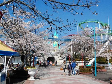 営業を再開した「八木山ベニーランド」。桜も見ごろを迎え、多くの家族連れがアトラクションや花見を楽しんだ