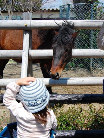 「大丈夫だった?」心配するように女児の顔をのぞき込むウマ。営業を再開した八木山動物公園で