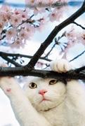 仙台・藤崎で岩合光昭さん写真展「ねこ歩き」-個性豊かな猫を写した180点
