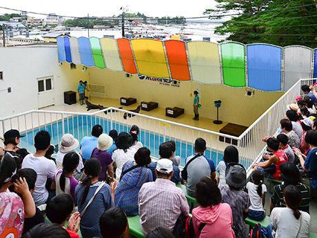 夏休みの家族連れで立ち見が出るほどの人気を見せているアシカショー。客席からは松島湾も見える
