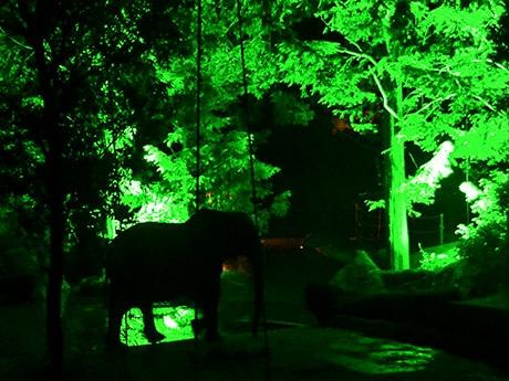 幻想的に照らし出された園内に浮かび上がるゾウのシルエット