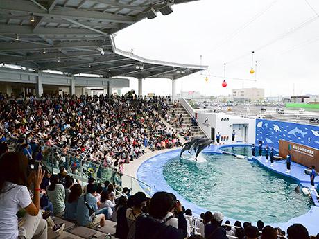 イルカとアシカがオープン初日の来館者をお出迎え。雨の平日にもかかわらず、毎回ほぼ満席となった