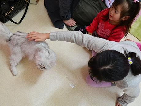 猫のイベントがあれば必ず出掛けるという母親と娘2人。「ふわふわでかわいい」と触れ合いを楽しんでいた
