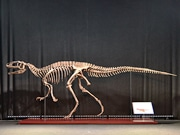 Koboスタ宮城で「恐竜博」 福井県立恐竜博物館所蔵の全身骨格など展示