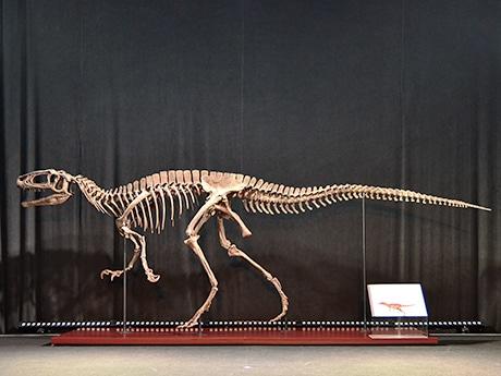 Koboスタ宮城の「恐竜博」で展示されているフクイラプトル
