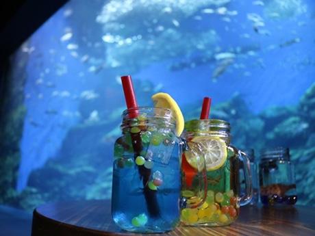 ノンアルコールカクテルを片手に、ムーディーにライトアップされた水槽を眺めて楽しむ「ナイトモクテリウム」イメージ