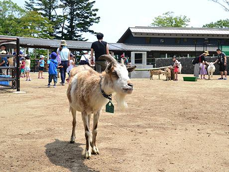 ズーパラダイス八木山にオープンした体験型施設「ふれあいの丘」。屋外パドックではヤギとの触れ合いも