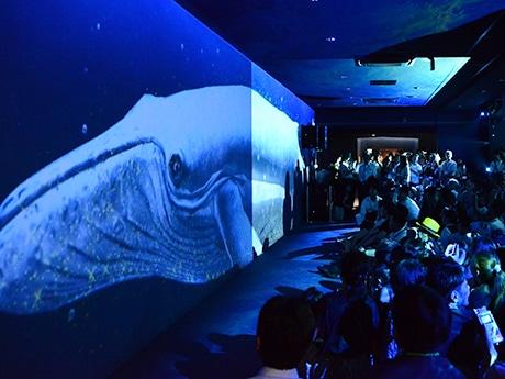 迫力のある音響とともに壁や天井を泳ぐザトウクジラの映像