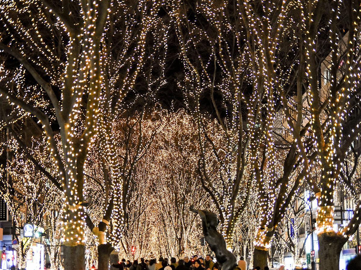 60万個のLEDが灯された定禅寺通のケヤキ並木