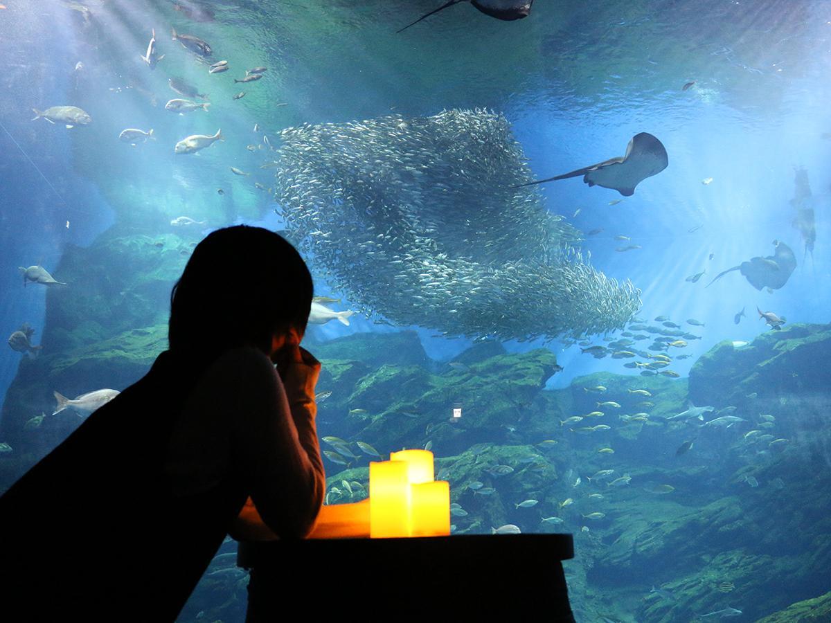 大水槽「いのちきらめく うみ」を独りでゆったりと鑑賞