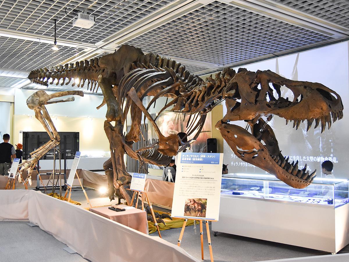 ティラノサウルスの全身骨格復元模型