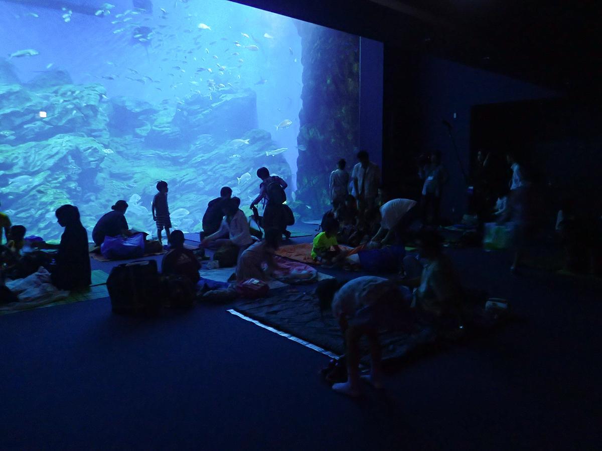 昨年実施した夜の生物観察会「大水槽前でおやすみなさい」の様子