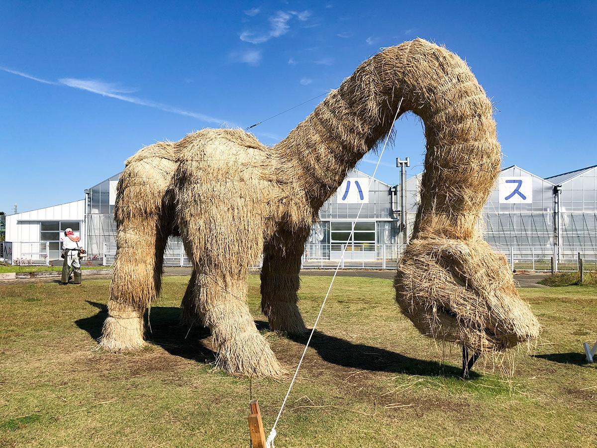 ブロントサウルスのわらアートは全長10メートルにも及ぶ