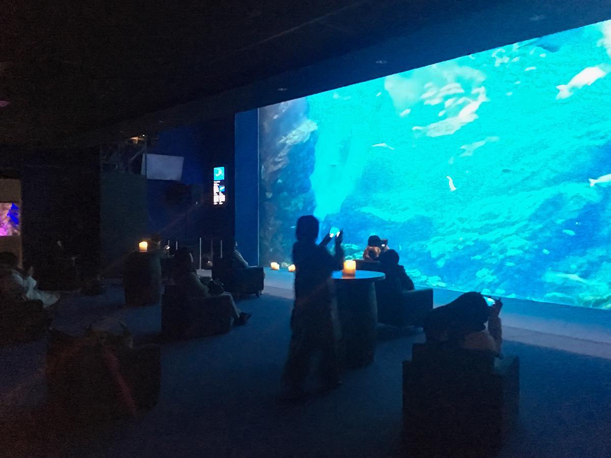 6月に行われた前回の「おひとりさまナイト水族館」。延べ400人を超える「おひとりさま」が静かに夜の水族館を楽しんだ