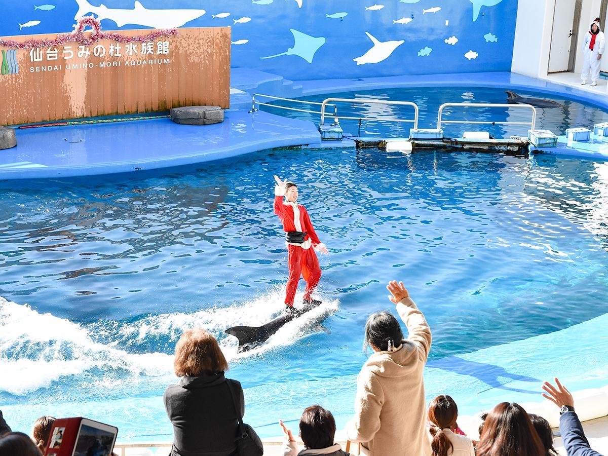 サンタのコスチュームに身を包んだスタッフによる「イルカ・アシカのパフォーマンス」