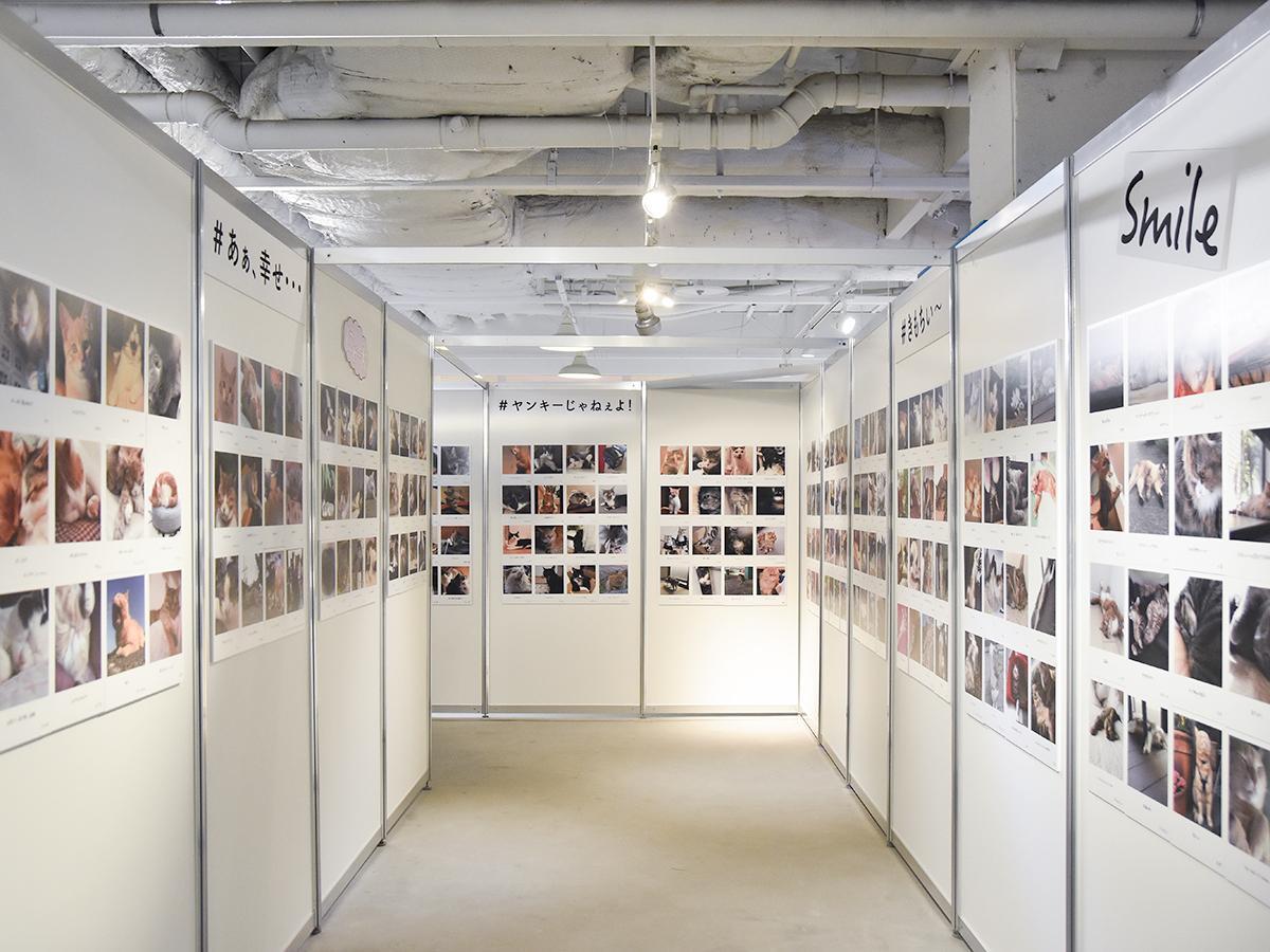 テーマに分けて展示されている約1000枚の応募写真