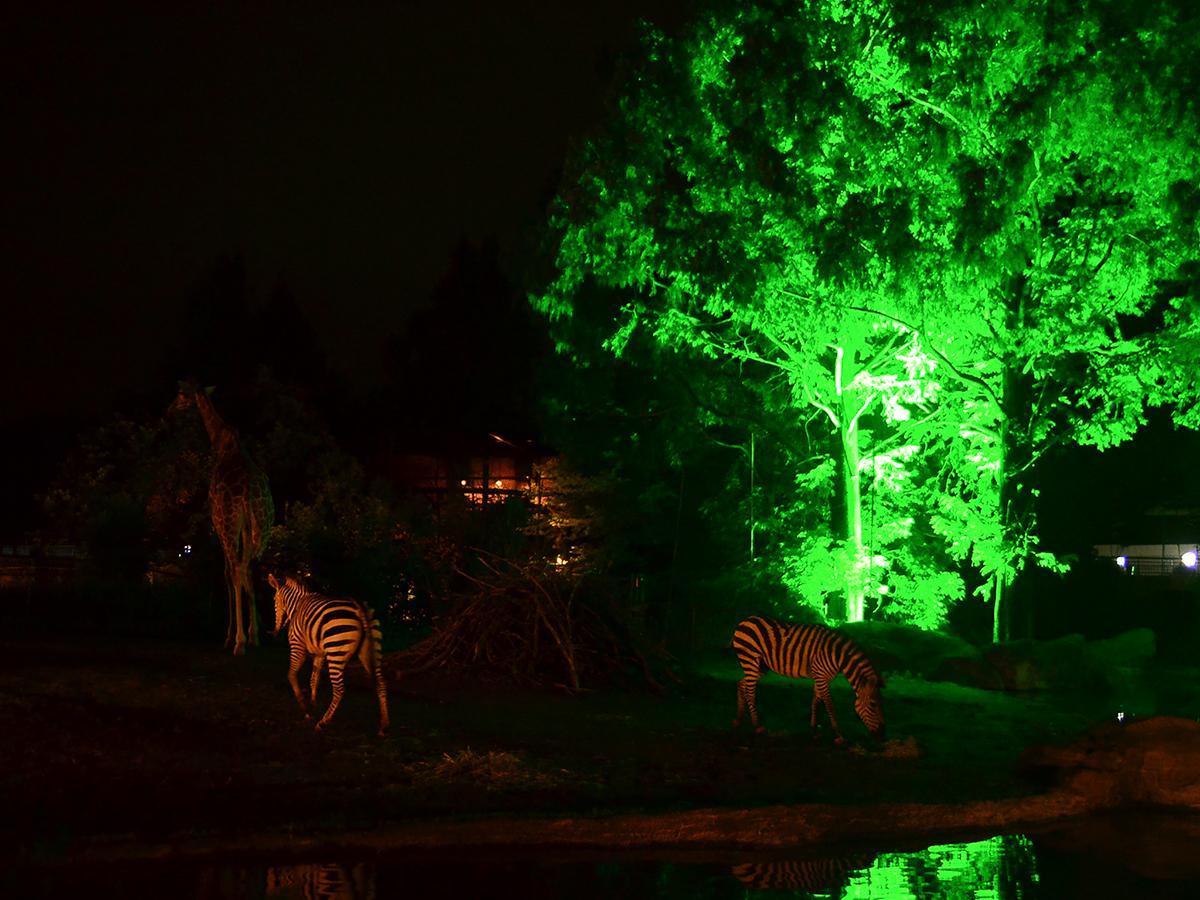 園内をライトアップする夜間開園。写真は2016年開催時のアフリカ園