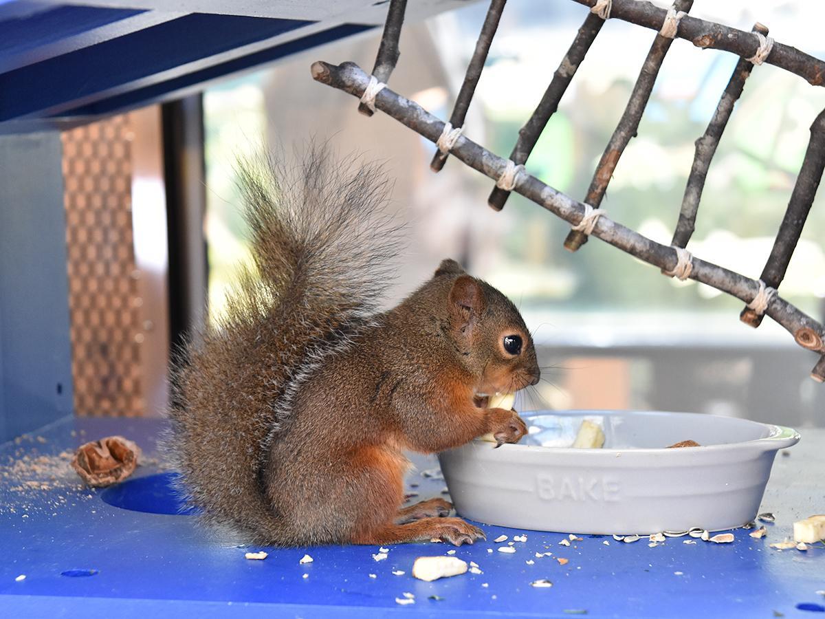 食事中の様子を間近で見られる「リスたちのレストラン」