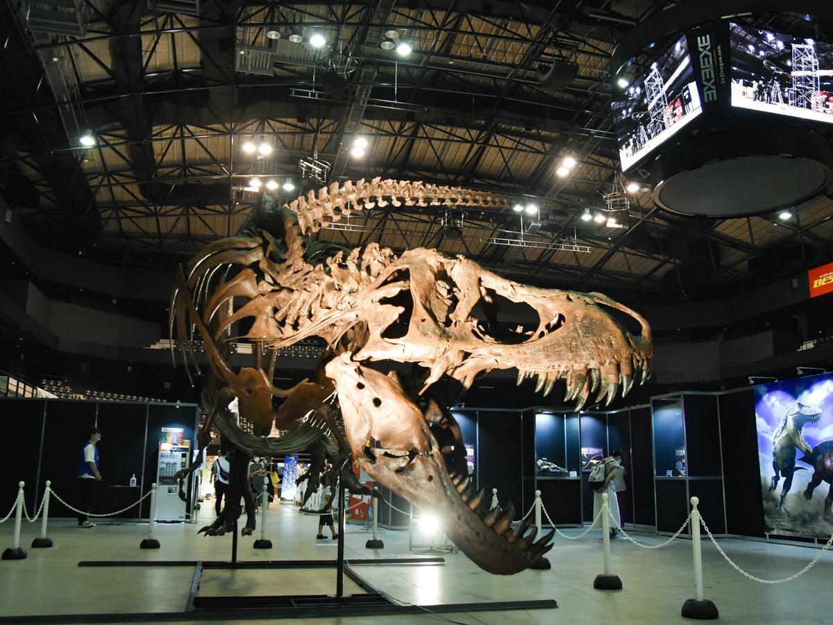 子どもたちに人気で主催者一推しという「ゾーン4 肉食恐竜の頂点」のティラノサウルス