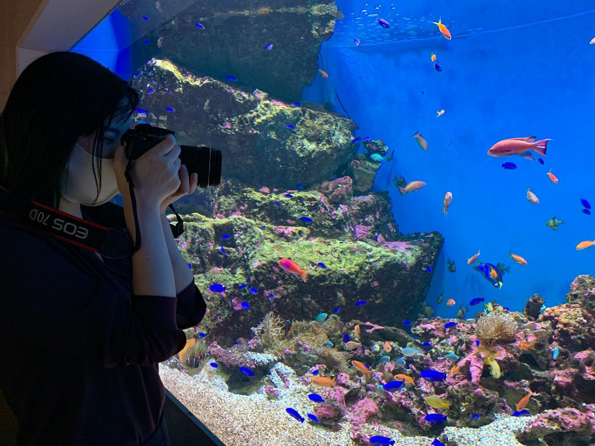 """写真愛好家限定の「""""カメラを楽しむ""""おひとりさまナイト水族館」イメージ。館内の照明をできるだけ落とし、撮影しやすい環境を整える"""