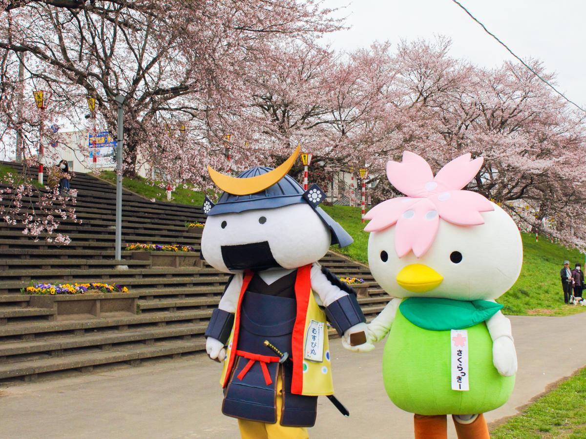 大河原町の象徴「一目千本桜」を一緒に楽しむさくらっきー(右)とむすび丸(写真提供=むすび丸)