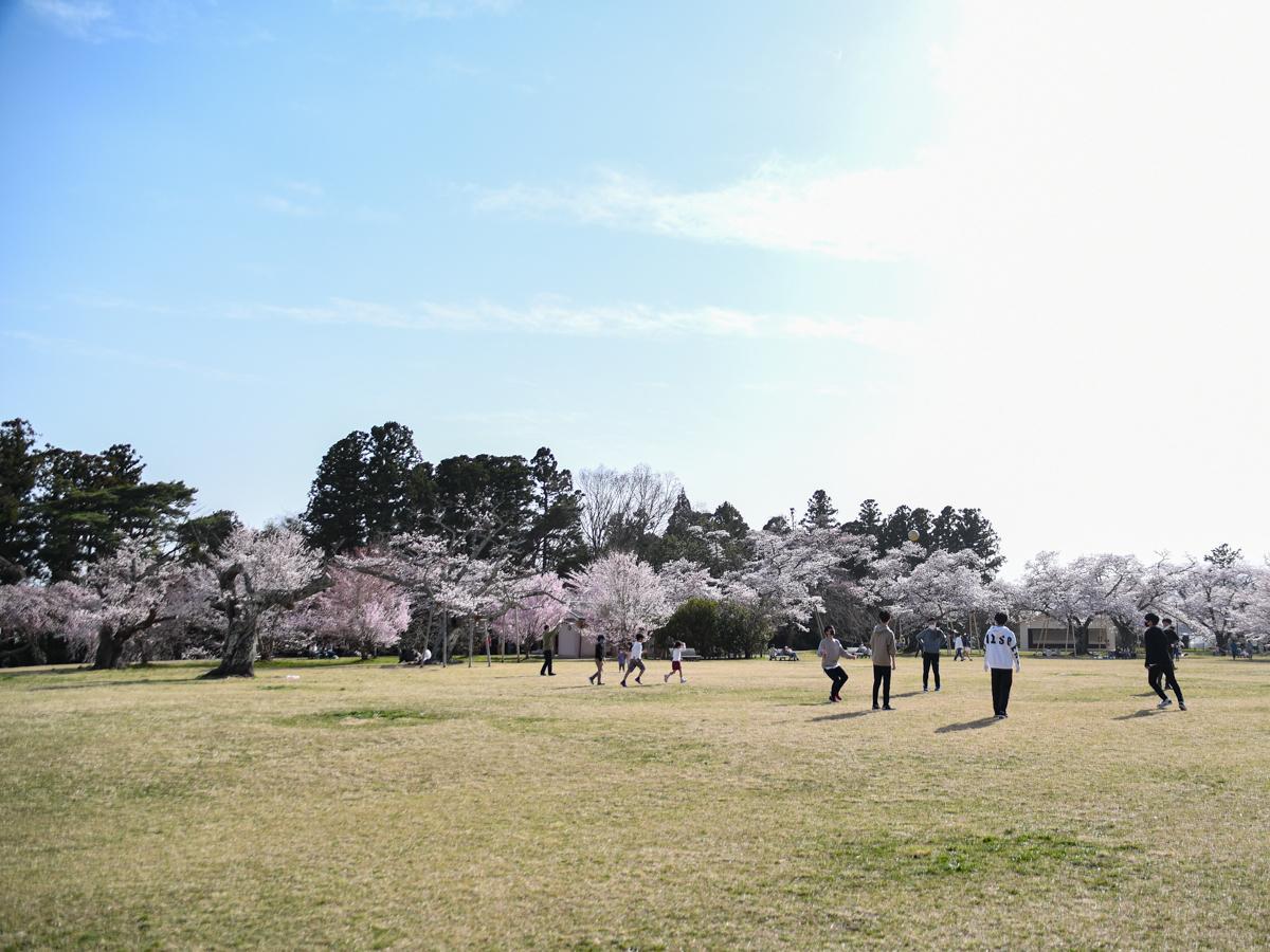 仙台市内では19度まで気温が上がり、三神峯公園は親子連れや学生グループらでにぎわいを見せた