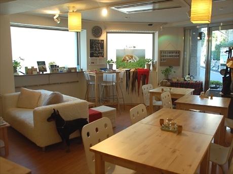 代官山にオープンしたドッグ&キャットカフェ(写真=店内)。ペットフードメーカーが商品開発のリサーチを目的にオープンした