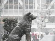 渋谷・ハチ公前でも「雪景色」-東京地方で未明から雪、積雪も