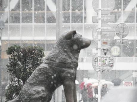 渋谷・ハチ公前では昼過ぎになっても降雪が続き、珍しい「雪景色」で人々を驚かせた