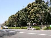 CCC、来春代官山に新商業施設-「次世代TSUTAYA」を展開へ