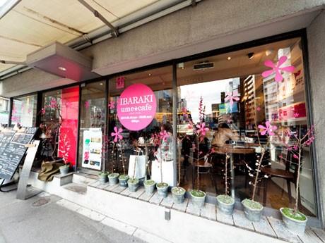 店頭には梅の苗木を飾るほか、各テーブルには観光各所の写真も掲出